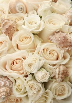 These roses and sea shells would make a terrific wallpaper background.