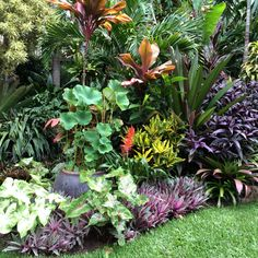 Super Garden Tropical Landscaping Pools Ideas Best Picture For tropical garden ideas perth For Your Plants, Beautiful Gardens, Tropical Backyard, Backyard Garden, Tropical Garden Design, Tropical Plants, Balinese Garden, Tropical Landscaping, Shade Garden