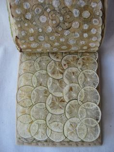 Garden Ledger by Susan Mills -  vegetable and fruit parchment text block with recycled felted wool cover #artists_books