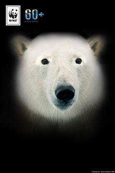 Wenn wir den Klimawandel nicht stoppen, wird der Eisbär bald aussterben. Eine von sechs Tierarten ist durch den Klimawandel vom Aussterben bedroht. Macht mit bei der #EarthHour und setzt ein Zeichen für mehr Klimaschutz. Klimaschutz ist Artenschutz!