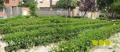 Jardines para niños, jardines para aprender, en esta imagen un laberinto para niños http://espaciosvivos.blogspot.com.es/2013/07/jardines-para-de-ninos-jardines-para.html