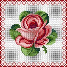 Rose With Border