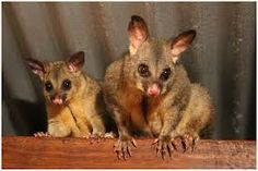 possum magic - Google Search