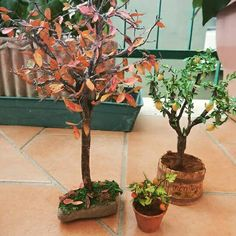 Alberi e piante  Scala 1:12