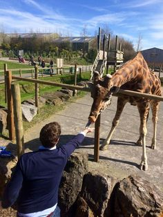 Giraffes at Folly Farm in West Wales - like no other farm you've been to. It is home to 750 different animals, including lions, rhinos and penguins Folly Farm, Wales Holiday, Rhinos, Farm Yard, Fresh Start, Giraffes, Exotic Pets, Farm Animals, Penguins