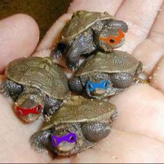 TMNT!! When I was 3 I had a pet turtle. If he had 3 siblings we DEFINITELY would have done this. Haha. But since we only had one my brothers couldn't decide which one was the best, so we left him a regular turtle...