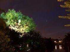 Manifesting the Magic: Making Memories: Tree of Life at Night