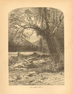 North Carolina, French Broad River, Bunny, Rabbits, Vintage, Antique Art Print,
