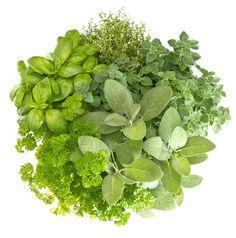 Welche Kräuter beim Abnehmen helfen und mit welchen natürlichen Hausmitteln man eine Diät sinnvoll unterstützen kann - Alle Pflanzen zum Gewicht verlieren.