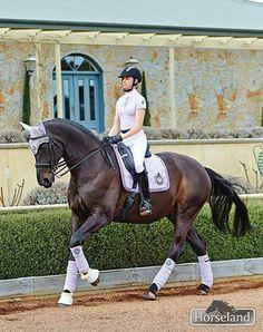Sponsored #rider Shanon McKimmie rides Ambassi in their matching new season Euro-star outfits. #horseland