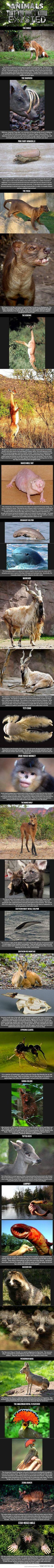 Alguns animais eu nunca vi na vida! muito top!