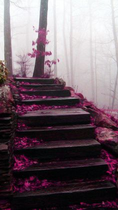staircase in the Blue Ridge Mountains My brother where do you intend to go tonight? I heard that you missed your connecting flight, to the blue ridge mountains, over near Tennessee. Blue Ridge Mountains, Nc Mountains, Beautiful World, Beautiful Places, Beautiful Pictures, Beautiful Scenery, Beautiful Stairs, Beautiful Gorgeous, Wonderful Places