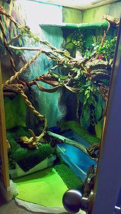 DIY Chinese Water Dragon terrarium (walk-in) Reptile House, Reptile Room, Reptile Cage, Vivarium, Paludarium, Chameleon Enclosure, Reptile Enclosure, Reptile Terrarium, Terrarium Diy