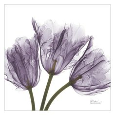 Tulips Purple Trio Art Print