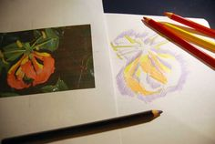 Learning how to see | Shiny Happy Art Online