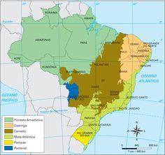 Paraná - Conheça seu Estado (História e Geografia): 38 - Biomas brasileiros