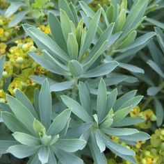 Tom Stuart Smith, Mediterranean Garden, Garden Plants, Nature, Green, Ajouter, Europe, Top, Gardens
