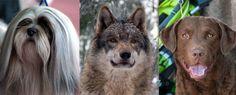 Hungry Like The Wolf : Retriever Life