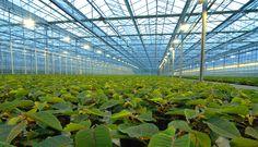 BIj Kapitaalintensief hoort glastuinbouw, de groenten en dergelijke worden in kassen verbouw. Dit hoort bij kapitaalintensief omdat  er een gebouw voor gebruikt wordt.