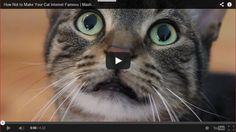 So Funny!  How Not to Make Your Cat Internet Famous - http://www.mustwatchnow.com/funny-make-cat-internet-famous/