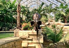 Gardens Gone Wild at Lauritzen Gardens  Through October 04, 2015 (Recurring daily) Location: Lauritzen Gardens Venue: Lauritzen Gardens Address: 100 Bancroft Street, Omaha, NE 68108 Times: 9am-5pm Admission: $10 Adults/$5 for Children (6-12)/Free for Under 6
