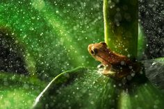 Nature animals frog leaves macro rain water drops plants amphibian bokeh wallpaper and background Bokeh Wallpaper, Frog Wallpaper, Plant Wallpaper, Animal Wallpaper, Nature Wallpaper, Wallpaper Backgrounds, Desktop Wallpapers, 1080p Wallpaper, Red Leaf Plant
