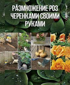 Farm Gardens, Outdoor Gardens, Small Farm, Health Eating, Plantar, Makeup Revolution, Horticulture, Gardening Tips, Landscape Design