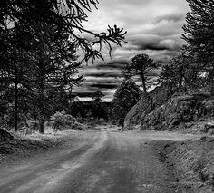 Caminos de la Pehuenia