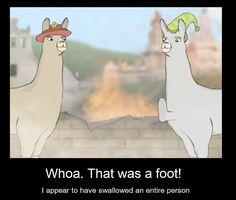 59 Best Llamas with hats images | Llamas with hats, Lamas ...