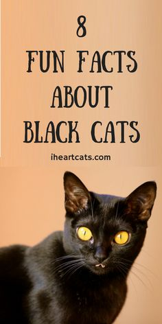 Black cats have gotten a bad rap for a long time, but most cat lovers know they're just another awesome feline. Black cats are just as sweet and goofy as any other cat and their coat color has nothing to do with it! Whether you've got a black cat or … I Love Cats, Crazy Cats, Cool Cats, Black Cat Breeds, Munier, Cat Reading, Cat Info, Cat Hacks, Kitten Care