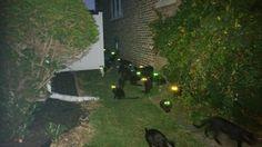 2. Скопление черных кошек