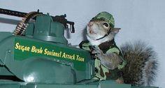 sugarbush squirrel | Sugar Bush Squirrel - International Superstar - Supermodel & Military ...