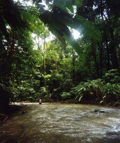 Discover the Costarican Jungle #PuraVida