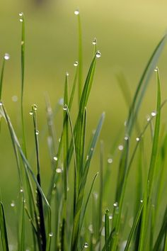 """Grasses After the Rain"" ~ Photography by Lynette Henderson on Flickr."