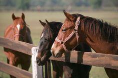 La cría de caballos requiere no sólo de conocimientos, sino también de constancia, responsabilidad, visión y pasión por la excelencia en la producción de animales competitivos para cualquier hipódromo del país y del extranjero.