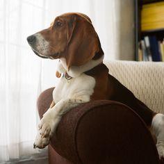 bassett hound love.