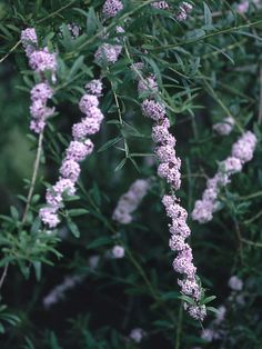 Shrubs for Areas With High Shade : Outdoors : Home & Garden Television