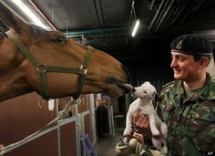 King's Troop Royal Horse 'Tango' Kisses Dog 'Lord Percy' At Major General's Inspection In Hyde Park, London