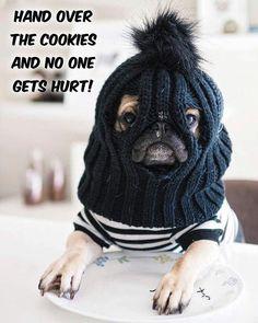 Oh my Come follow us #pugs #pug #puglover #pugslife #pugsofinstagram #dog #dogs…