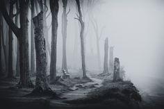 gespensterwald nienhagen   heute vormittag   plötzlicher seenebel zauberte diese einzigartige stimmung...