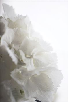 flower, white, photography,