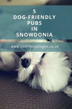 After a day spent exploring Snowdonia with your dog, there's nothing better than refuelling with a refreshing drink and maybe a light meal in a pub. Dog Travel, Family Travel, Travel Uk, Cool Places To Visit, Places To Travel, Travel Destinations, Dog Friendly Hotels, Eco Friendly, Cottages In Wales