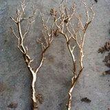 Gold Branches, Popsugar