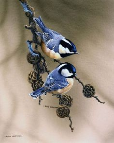 Art Friday: Sweet birds Did you know that birds are mentioned in 55 bible verses in the bible and not just mentioned, the different t. Small Birds, Little Birds, Pretty Birds, Beautiful Birds, Watercolor Bird, Watercolor Paintings, Bird Drawings, Bird Pictures, Wildlife Art