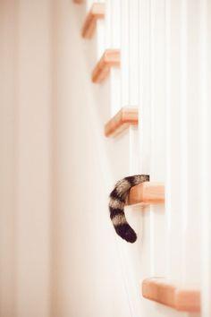 Peekaboo ( via Sabrina Boem ) Puppies And Kitties, Cats And Kittens, Kitty Cats, Crazy Cat Lady, Crazy Cats, Hate Cats, Pet Photographer, Lovely Creatures, Cat Boarding