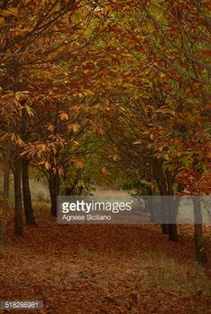 Foto stock : Autumn