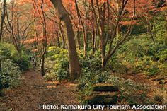 Places to go to Japan in Autumn: Kamakura