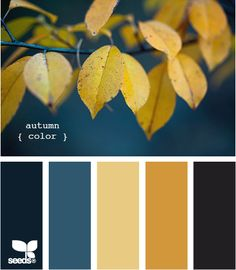 Elegant golden leaves pair with deep turquoise in this fall color palette.  Repinned via design-seeds.