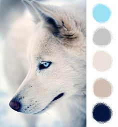 The colours of winter magic - Fairies & Co