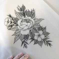 Due to a no show I now have this design available. Email me if you'd like it  lilac.fault@gmail.com  #floral #floralarrangement #illustration #dotwork #botanical #peony #peony #peonytattoo #tattooapprentice #apprenticetattoos #lilacfaulttattoo #theburtontattoocollective